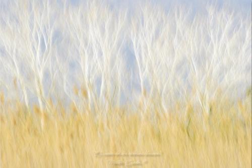 El sueño de los árboles blancos